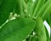 zaitynaturalcosmetics-blog-huile-essentielle-ravintssara